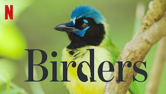 Birders (2019)